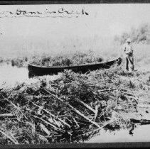 Image of 1846 - Beaver dam in creek.