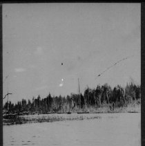 Image of 1866 - Deer on Joe Creek.