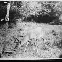Image of 2003 - Deer, Rock Lake area.
