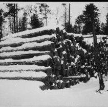 Image of Logging.