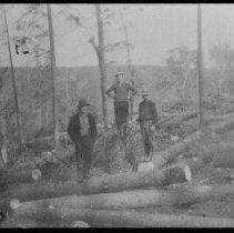 Image of 2049 - White Pine logs before skidding, Booth Lake.