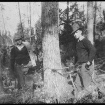Image of 1936 - Cutting White Pine, Booth Lake.