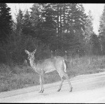 Image of 2200 - Deer on Highway 60.