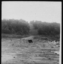 Image of 1952 - Black Bear.