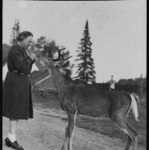 Image of Feeding deer at Cache Lake.