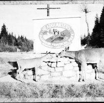 Image of Deer.