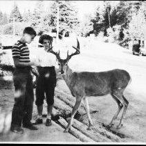 Image of 2844 - Feeding deer.
