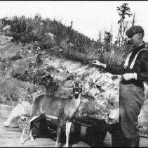 Image of Feeding deer at station platform.