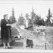 Image of 2921 - Feeding deer along Highway 60.