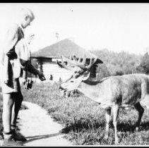 Image of 2949 - Feeding deer.