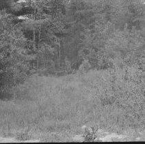 Image of 3091 - Old skid road.