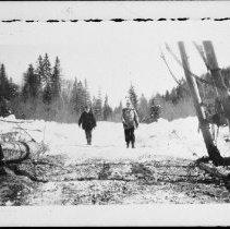 Image of 3230 - Hardwood logging operations on Algonquin's west side