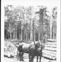 Image of 3498 - Stockpile of Logs