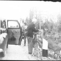 Image of 3506 - Feeding Deer Along Highway #60