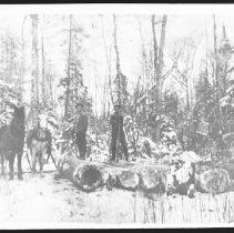 Image of 1913 - Horses and Men at a Skidway