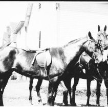 Image of 3622 - Saddle Horses from Camp Tanamakoon at the Highland Inn