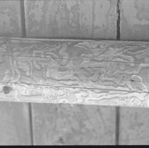 Image of 1977 - Wood Borer Channels in Rafters of Front Veranda at the Nominigan Lodge