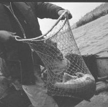 Image of 4191 - Frank Hicks With an Adult Lake Trout