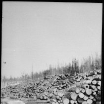 Image of Stockpile of logs