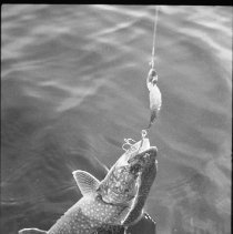 Image of 4418 - Fishing for lake trout, 1977.