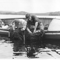 Image of 4528 - Removing fish from trap net in bass population study - Opeongo fish lab.