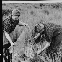 Image of June 1955 - Taking minnow samples from creek, L. Opeongo