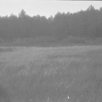 Image of 8 Aug. 1977 - Clearings at McIntyre farm, Bonnechere River