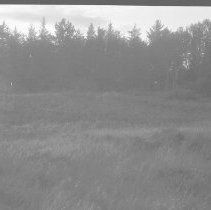 Image of 4659 - Clearings at McIntyre farm