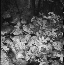 Image of 4721 - Robitaille Creek