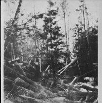 Image of 4801 - Log jam on Bissett Creek