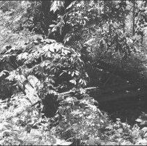 Image of 4868 - Dennison grave