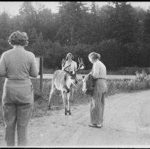 Image of 5169 - Feeding deer along Hwy. #60 near Cache Lake