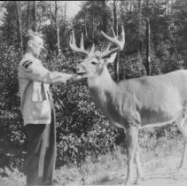 Image of 1950 - R.D. Ussher, feeding deer along Hwy. #60