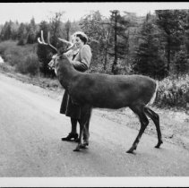 Image of 5192 - Mollie Ussher, feeding deer along Hwy. #60