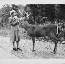 Image of 5193 - Mollie Ussher, feeding deer along Hwy. #60