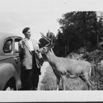 Image of c. 1950 - Feeding deer along Hwy. #60