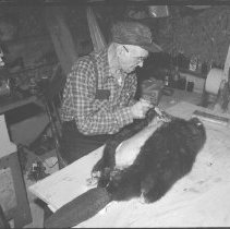 Image of 5574 - Mr. Clarence Bouges skinning a beaver, Dwight, c. 1979.