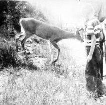 Image of 5928 - Feeding deer on Hwy. 60