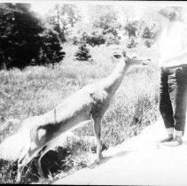 Image of 5934 - Feeding deer on Hwy 60