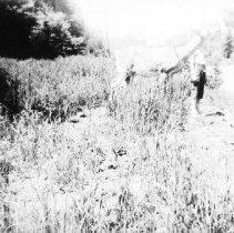 Image of 5936 - Feeding deer on Hwy 60