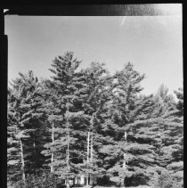 Image of 6023 - Crooked Chute ranger cabin