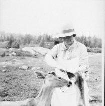Image of 1928 - Feeding fawns