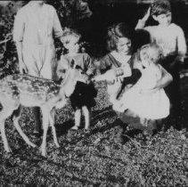 Image of 6690 - Feeding deer