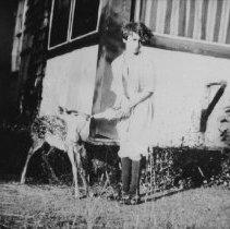 Image of Feeding fawn