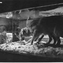 Image of 3269 - Algonquin Park Museum