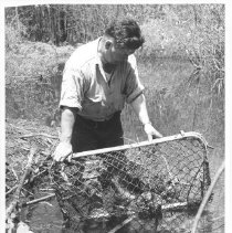 Image of 3892 - Lifting Live Trap with Beaver In It