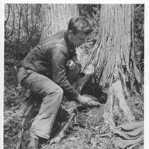 Image of 1947 - Mammalogist York Edwards With a Small Mammal Trap
