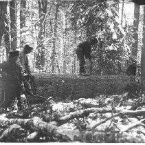 Image of 1873 - Lining a log