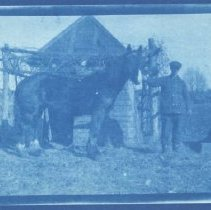 Image of Cyanotype of a Man with a Horse on the Burnham Farm  - 7406-14