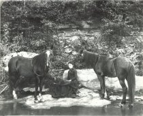 Image of Viola Crandall with her horses
